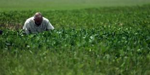 Engenheiro agrícola analisa lavoura de soja que foi afetada por enchentes perto de Pergamino, na Argentina 23/01/2017 REUTERS/Marcos Brindicci