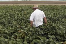 Funcionário em lavoura de soja na cidade de Primavera do Leste, no Estado do Mato Grosso 07/02/2013 REUTERS/Paulo Whitaker