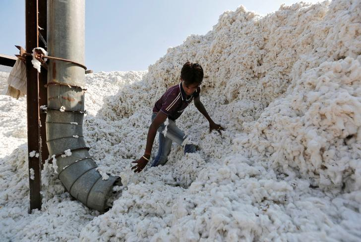 FILE PHOTO: A worker fills a vacuum pipe with cotton to clean it at a cotton processing unit in Kadi town in Gujarat, India, February 9, 2015.  REUTERS/Amit Dave/Files