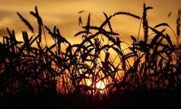 Пшеница на поле аграрного предприятия Солгонское к юго-западу от Красноярска 6 сентября 2014 года. Агентство СовЭкон в четверг сообщило о снижении прогноза урожая зерна в РФ в 2017 году до 106,5 миллиона тонн с ожидавшихся ранее 109,5 миллиона тонн. REUTERS/Ilya Naymushin