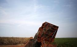 Descarregamento de cana de açúcar em caminhão, em Ribeirão Preto, São Paulo. 15/09/2016 REUTERS/Nacho Doce