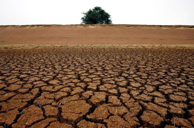 5月30日、ヒートアイランド現象によって都市部の気候変動対策費用は同現象がない場合より2.6倍増えるとする研究論文が、科学誌「ネイチャー・クライメート・チェンジ」に掲載された。写真は干上がったダム。オーストラリアのニューサウスウェールズ州で撮影(2017年 ロイター/David Gray)