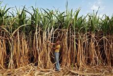 Campo de cana-de-açúcar nas redondezas de Ahmedabad, na Índia. 28/02/2015 REUTERS/Amit Dave