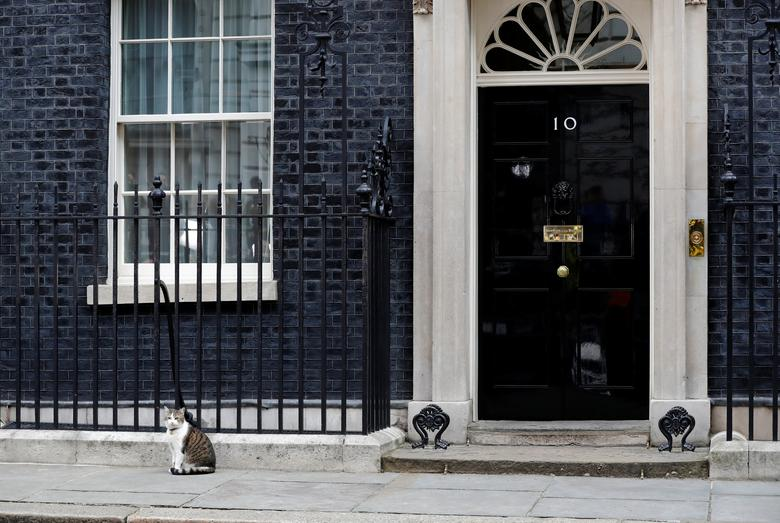 Larry the Downing Street cat sits outside Number 10, in London, Britain, June 9, 2017. REUTERS/Stefan Wermuth