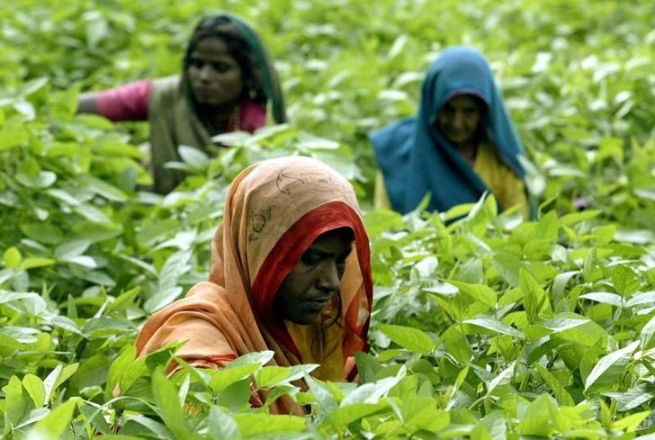 Indian women remove weeds from their soybean crop in Kurana village, on the outskirts of the central Indian city of Bhopal August 18, 2004. REUTERS/Stringer/Files