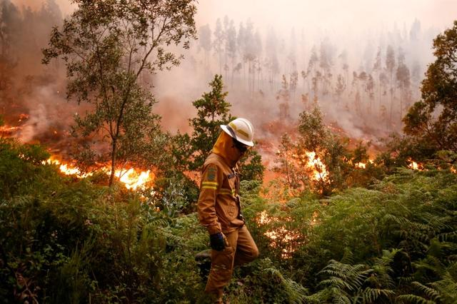 A firefighter works to put out a forest fire near the village of Fato, central Portugal, June 18, 2017. REUTERS/Rafael Marchante
