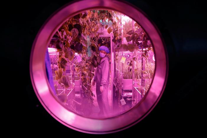 A volunteer checks on plants inside a simulated space cabin in which he temporarily lives with others as a part of the scientistic Lunar Palace 365 Project, at Beihang University in Beijing, China July 9, 2017. Damir Sagolj