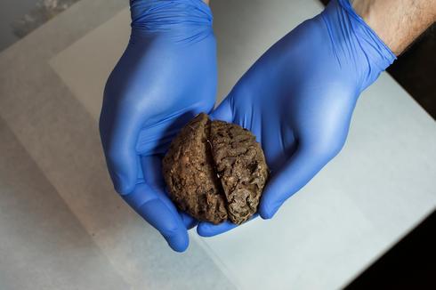 Preserved brains found in Spanish grave