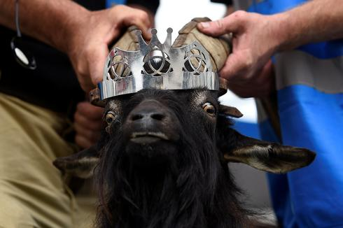 Long live the goat king