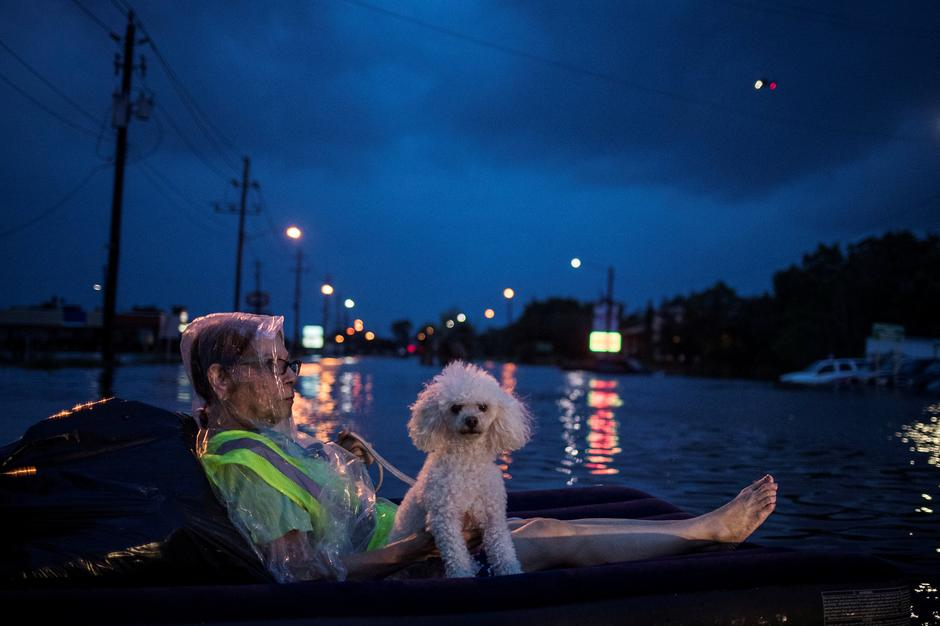Texans Refuse To Leave Pets Behind As They Flee Harvey - Some people tied their dogs up and left them to die during the flood