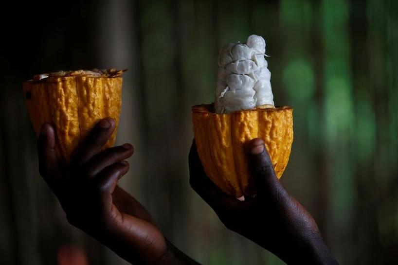 Top cocoa producers to create buffer stock to influence world prices | Reuters