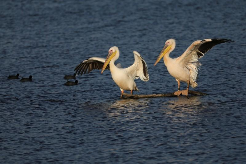 Migrating Birds Winter In Israel As Climate Change Makes
