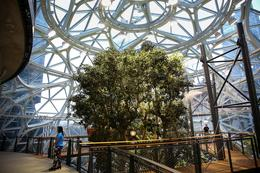 Inside Amazon's Spheres