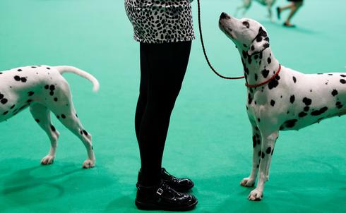 Crufts Dog Show