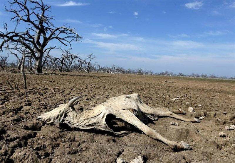A dead cow is seen on dried up grounds in Shahreza, Iran in this undated picture. Tasnim News Agency/ via