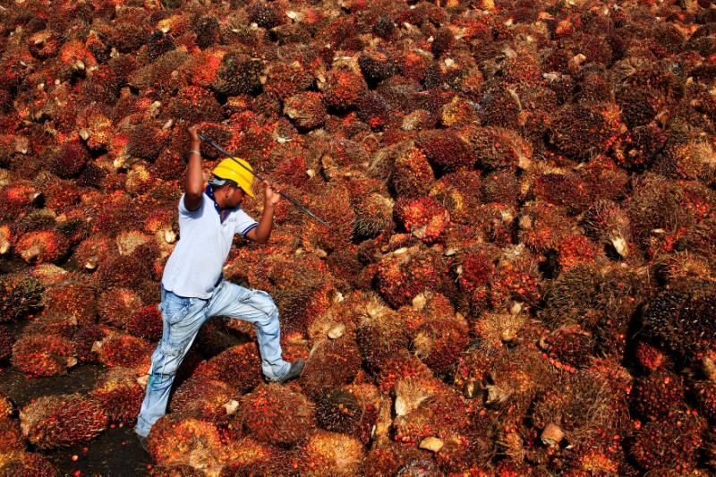 A worker collects palm oil fruit inside a palm oil factory in Sepang, outside Kuala Lumpur, Malaysia February 18, 2014. Samsul Said