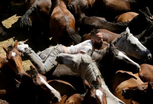 Wild horse wrestling