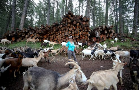 Ethiopian migrant brings Italian hills alive with the sound of goats
