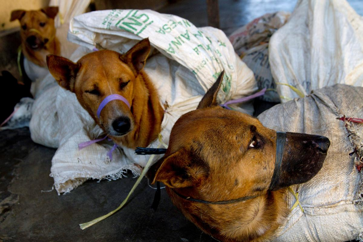 Indonesia works to ban trade of meat from pets, exotic ...