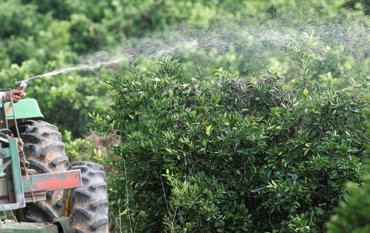 Ban on glyphosate would be 'disaster' for Brazil agriculture