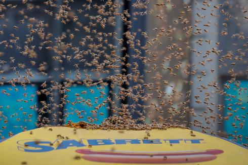 Bees swarm Times Square