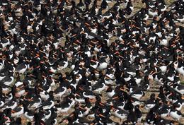 Thousands of birds flock to British estuary