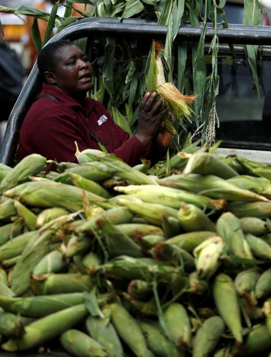Zimbabwe's agriculture authority issues $75 million grain bills to buy maize