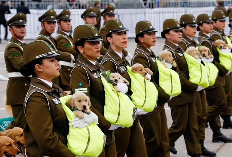 Chilean police officers march with the puppies of future police dogs during the annual military parade at the Bernardo O'Higgins park in Santiago, Chile. REUTERS/Rodrigo Garrido