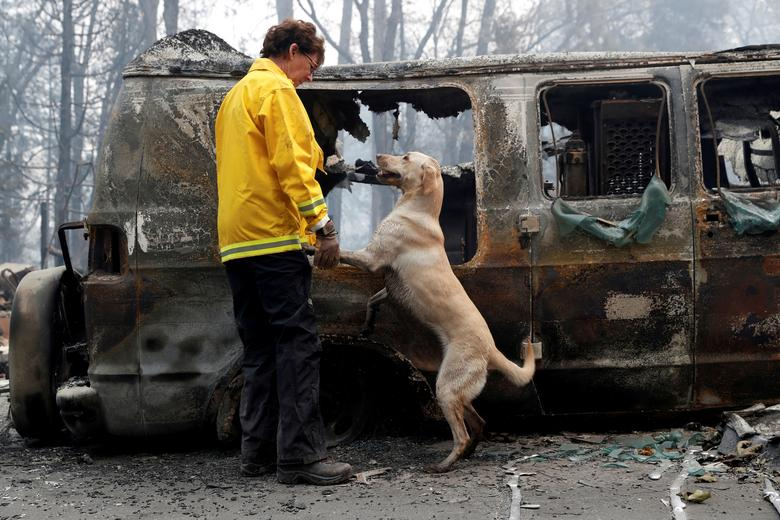 Karen Atkinson, of Marin, searches for human remains with her cadaver dog, Echo, in a van destroyed by the Camp Fire in Paradise, California. REUTERS/Terray Sylvester