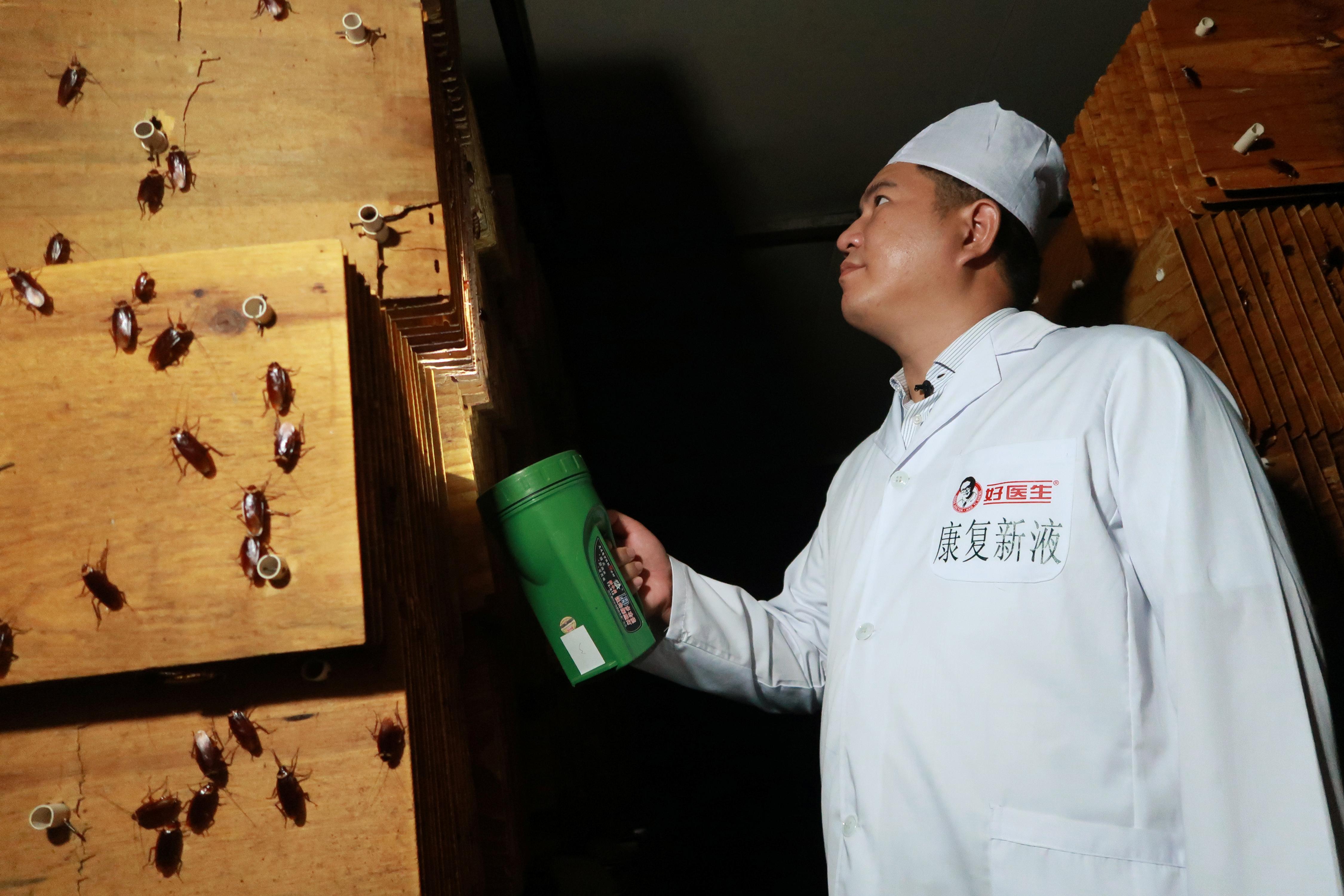 Cucarachas: ingrediente principal en poción curativa china.