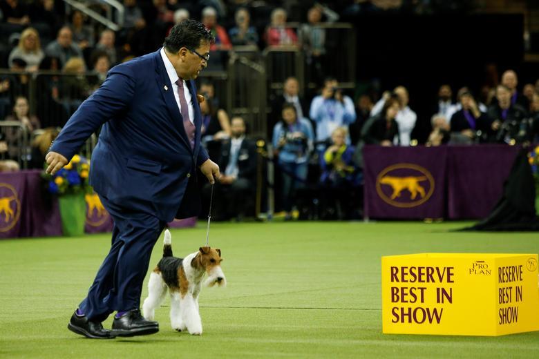 Westminster Dog Show | Reuters com