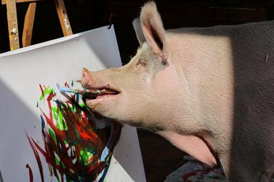 Animal artists
