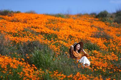 Springtime super bloom in California