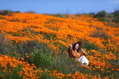 Springtime super bloom in California