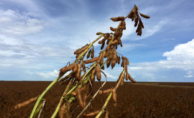 Anec reduz previsões de exportações de soja e milho do Brasil em 2019