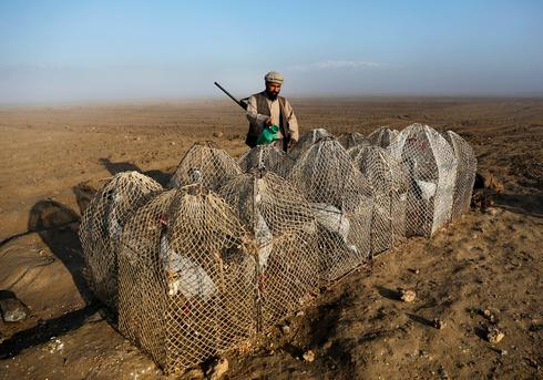 Bird hunters of Afghanistan