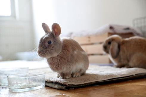 アングル:イースター後の「捨てウサギ」急増、加州が阻止作戦