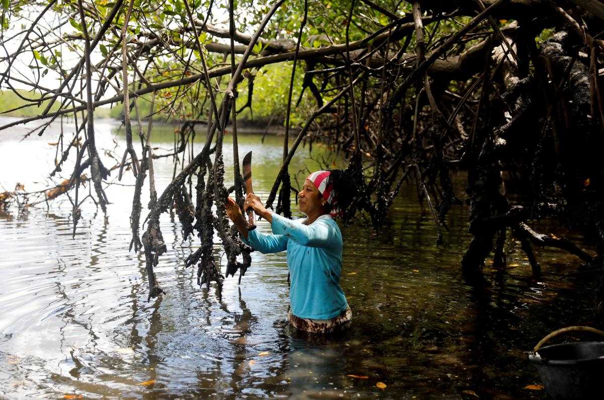 Brazil's mangroves on the front line of climate change