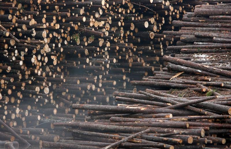 'After coal, forest-rich Finland will need to import biomass to keep...' /