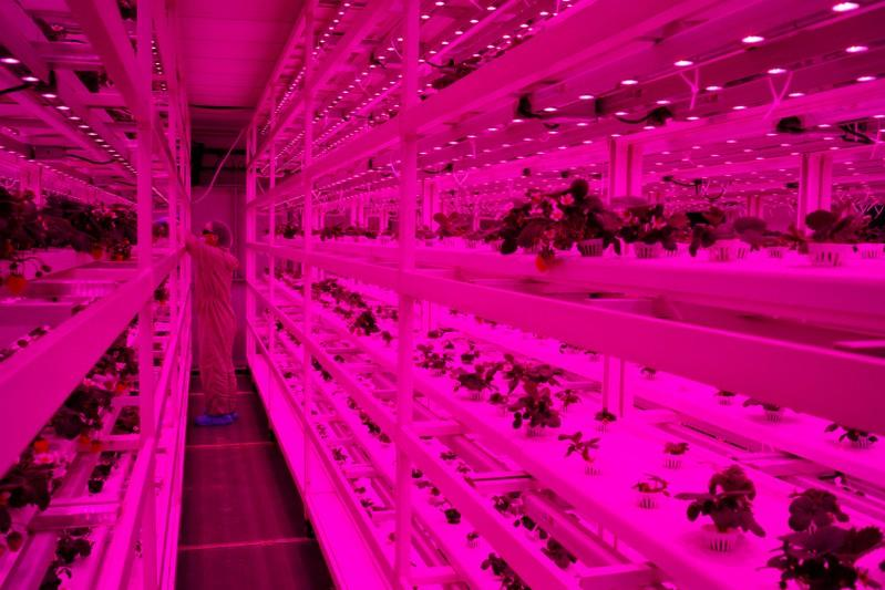 From sky farms to lab-grown shrimp, Singapore eyes food