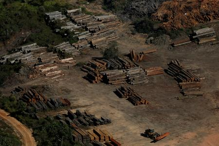 Brazil environment agency launches operation to combat Amazon deforestation