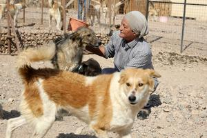 Woman on a mission to rescue street dogs in Jordan