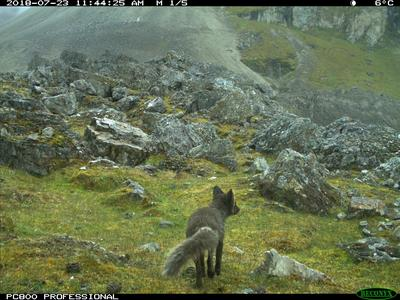 Elusive animals caught on remote cameras