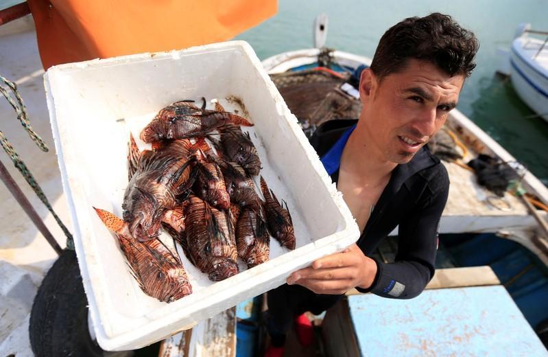 As waters warm, lionfish invasion strains Lebanon's seas