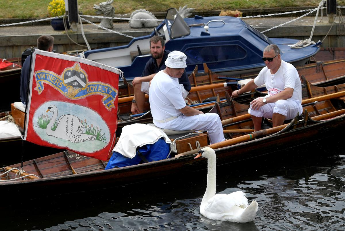 """All up"": Queen Elizabeth's swans checked and counted"