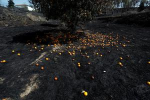 Wildfires extinguished in central Portugal