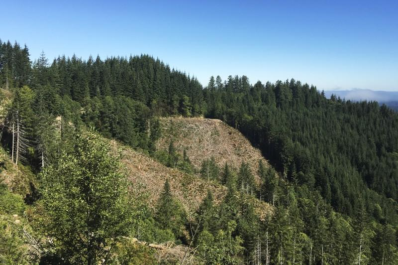 U.S. has lost 24 million acres of natural land in 16 years: independent report
