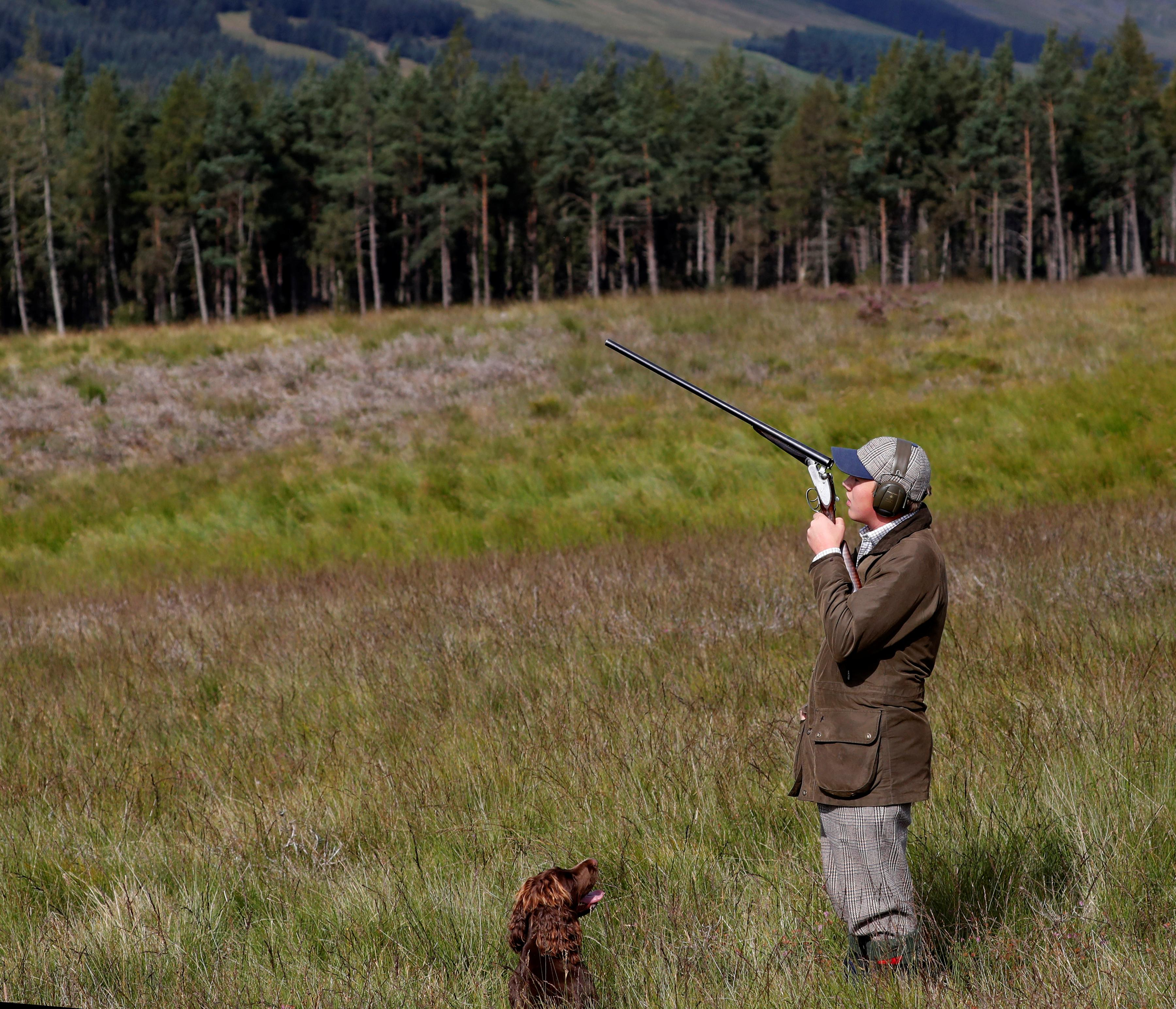 Labour calls for grouse shooting review as 'Glorious Twelfth' begins