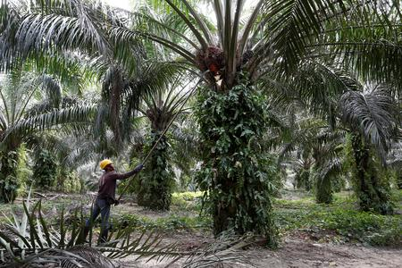 Malaysian PM urges Britain to 'break with Europe' on palm oil: Bloomberg