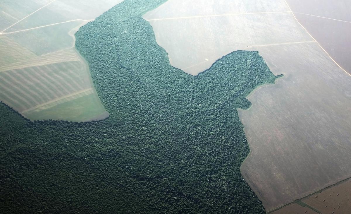 Brasiliaanse state omseil Bolsonaro om die befondsing van reënwoudbeskerming direk te bespreek